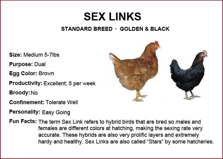 Advantage of sex linked chickens