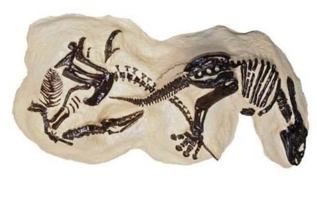 ainda não foi leiloado, mas estima-se que o fóssil de dois dinossauros em uma luta de vida ou morte possa arrecadar até US$ 9 bilhões de dólares. Ele foi encontrado em Montana, em 2006, e está muito bem preservado, incluindo até mesmo fragmentos de pele. Os dinossauros são um tyrannosaurid e um triceratops. - Mega Curioso