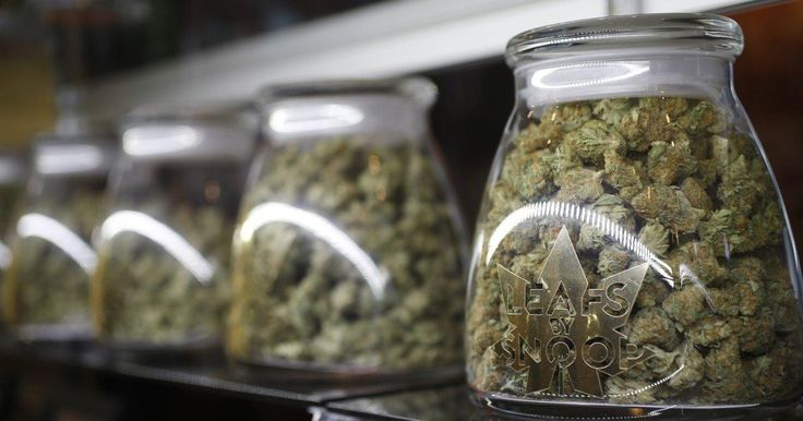 Colorado raked in over half a billion dollars in marijuana tax revenue - New York Daily News