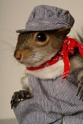 Squirrel engineer ✿⊱╮