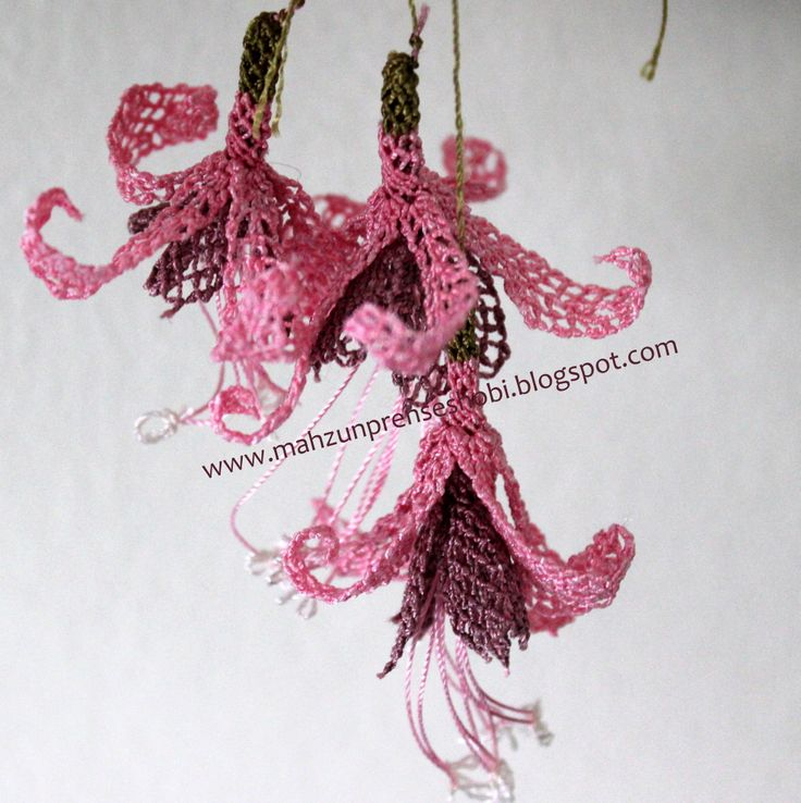 Fuschia with needle lace