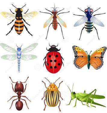 Kumpulan Nama Insects (Serangga) Dalam Bahasa Inggris Beserta Arti - http://www.sekolahbahasainggris.com/kumpulan-nama-insects-serangga-dalam-bahasa-inggris-beserta-arti/