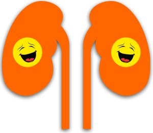 The kidney is one of the most important organs in our body. It is typically a two-shaped organ, located at the rear of the abdominal cavity in the retroperitoneal space. The Kidney's are typically between 8-12 cm long .