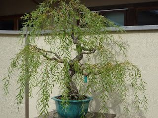 Weeping Willow ♥  One of my favorites