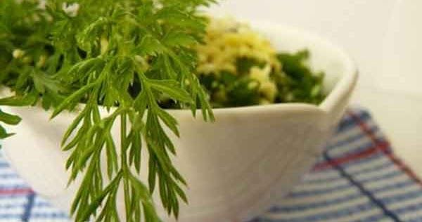 Un articol de Mihaela Iliescu     Foarte puțin cunsocute ca aliment, frunzele morcovului au proprietăți remarcabile. Conțin vitamina C (în ...
