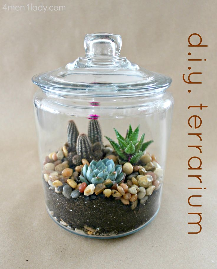 50 best images about Terrarium Garden and mini greenhouse ...