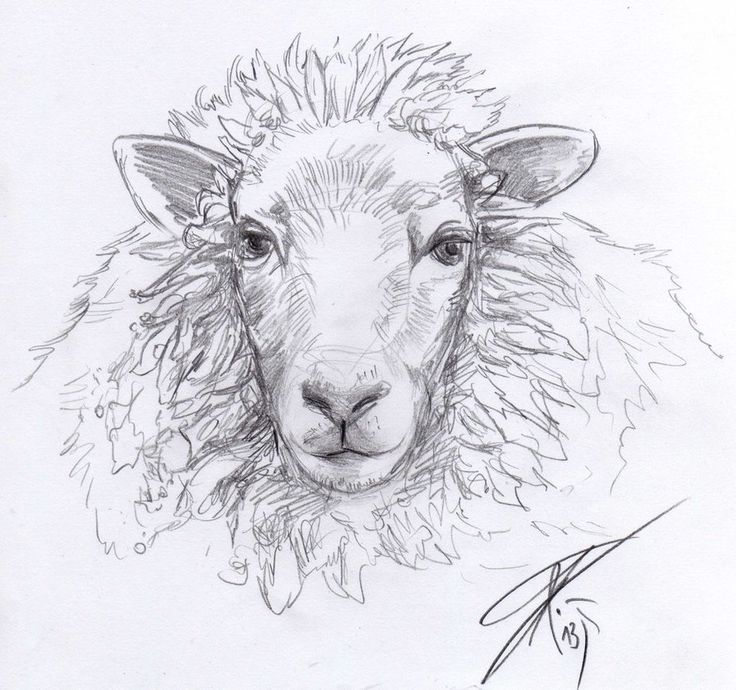 i think sheep heads have something relaxing cc by sheep sketch