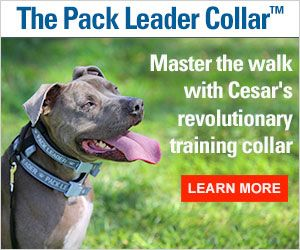 5 things you're doing that drive your dog crazy | Cesar Millan