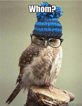 smart owl memes   quickmeme
