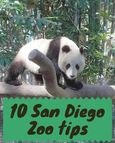 The San Diego Zoo is consistently one of America's top 5 zoos year after year. The gorgeous San Diego weather makes any time of the year the perfect zoo day. It also means that most of the animals have outdoor exhibits instead indoor buildings which allows for more innovative exhibits.  Es