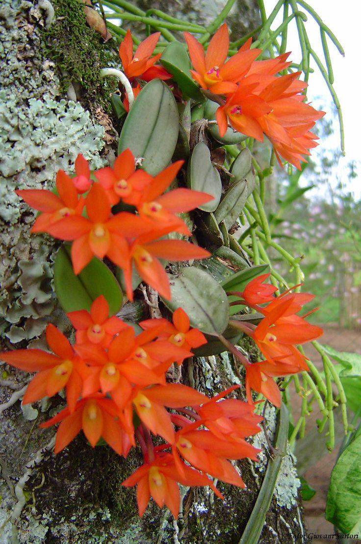 orquideas raras Más