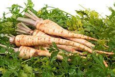 Îl găsim în orice grădină şi nici nu bănuit ce beneficii aduce organismului nostru. Are capacitatea de a trata, preveni sau ameliora boli şi este elixurul perfect împotriva îmbătrânirii. Acest aliment ţine deoparte cancerul, hepatita sau bolile pulmonare.  Pătrunjelul este o plantă erbacee medicinală, aliment şi condiment, cultivat în majoritatea zonelor de relief în...