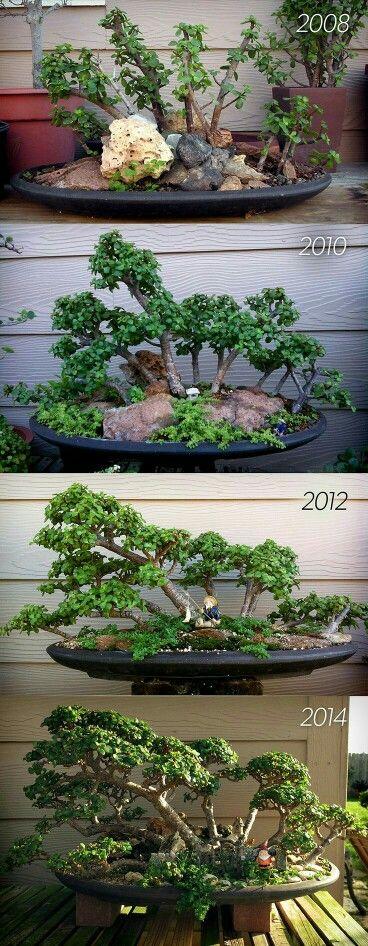 21 best Blume images on Pinterest   Backyard ideas, Creative ideas ...