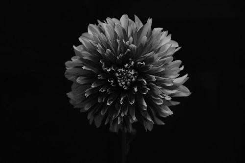 Xシリーズ写真展 作品紹介 FUJIFILM X-Pro2  XF16-55mmF2.8 Xシリーズ写真展2017秋より高橋 優里さんの作品をご紹介 . dahlia 大好きなダリアを撮影アウトフォーカス部分の粒子の感じがとても好きです黒つぶれがが少なく花びらの質感もとても綺麗に出てお気に入りの一枚になりました . #富士フイルム #FUJIFILM #xシリーズ #fujifilm_xseries #Xシリーズ写真展 #xpro2 #xf1655 via Fujifilm on Instagram - #photographer #photography #photo #instapic #instagram #photofreak #photolover #nikon #canon #leica #hasselblad #polaroid #shutterbug #camera #dslr #visualarts #inspiration #artistic #creative #creativity