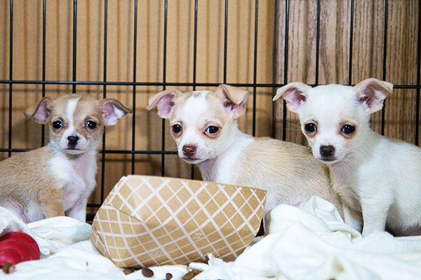Puppy Mills | ASPCA STOP ANIMAL CRUELTY: Don't buy a dog from a puppy mill! Help put an end to puppy mills.