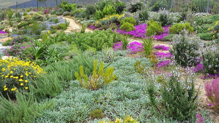 Fynbos Gardens Hermanus: September 2014