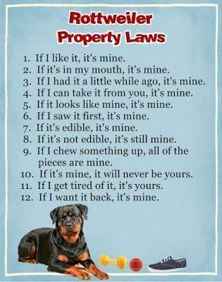 My spoiled pups say....I Know some people like this
