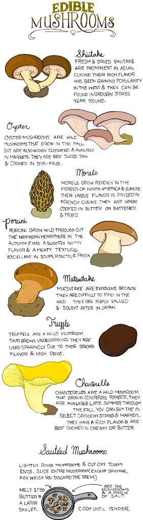 Take along an experienced expert when choosing edible mushrooms, because some types of this plant are poisonous. http://survivalistactical.com/