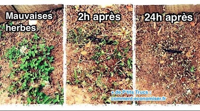 Besoin d'un désherbant efficace contre les mauvaises herbes ? Pas la peine d'acheter de produits chimiques comme celui-là ! Non seulement, c'est pas donné mais en plus c'est mauvais pour votre s...