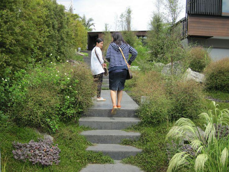 Native front garden designed by Xanthe White in Auckland Garden DesignFest