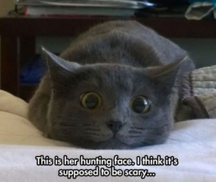 That is such a great…..'hunting face' hahaha
