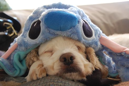 eep!Puppies, Pets Pics, Dogs, Dreams, Dresses, Naps Time, Blankets, Stitches, Adorable Animal