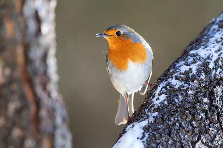 Robin, my little friend - null