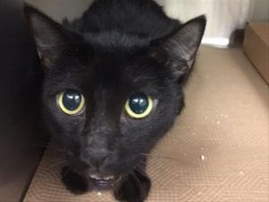 Poor AMAYA was surrendered by her owner to the ACC. She is confused to why she's here and is in desperate need of a loving home. Please consider.