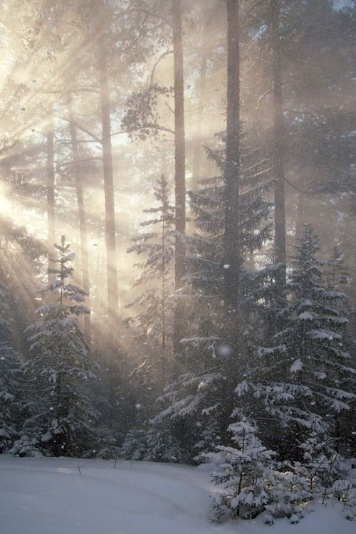Winter Mist And Light: