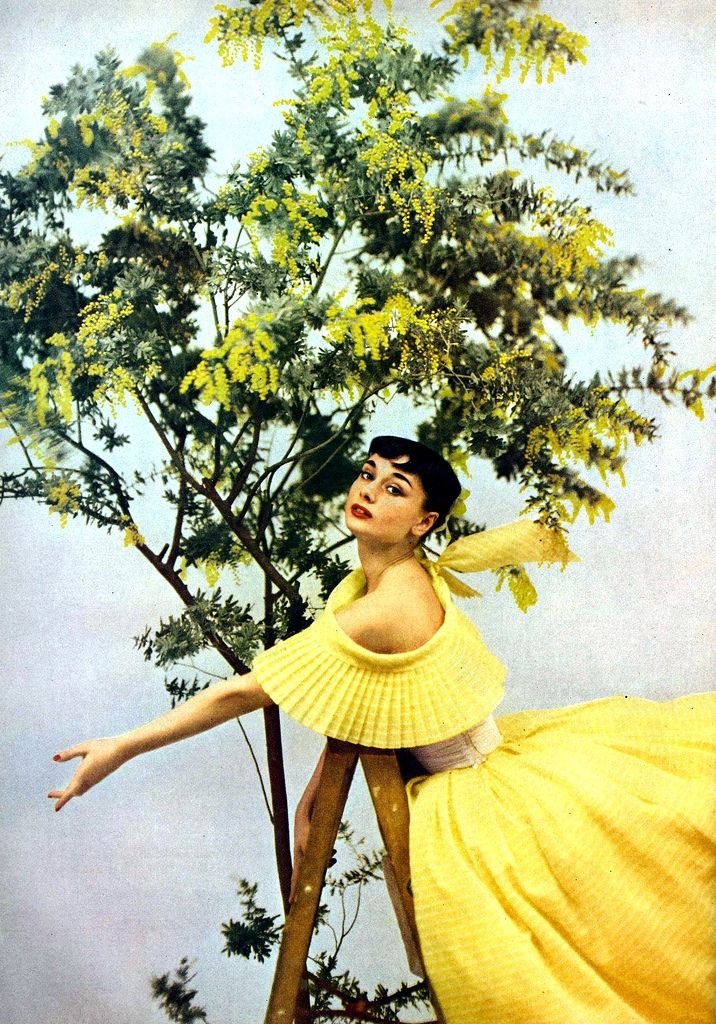 Audrey is wearing mimosa yellow gown by Ceil Chapman, photo by Richard Avedon for Harper's Bazaar, 1952