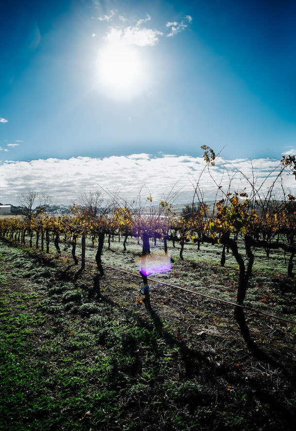 Eat, drink, cook, explore my way through The Barossa Valley