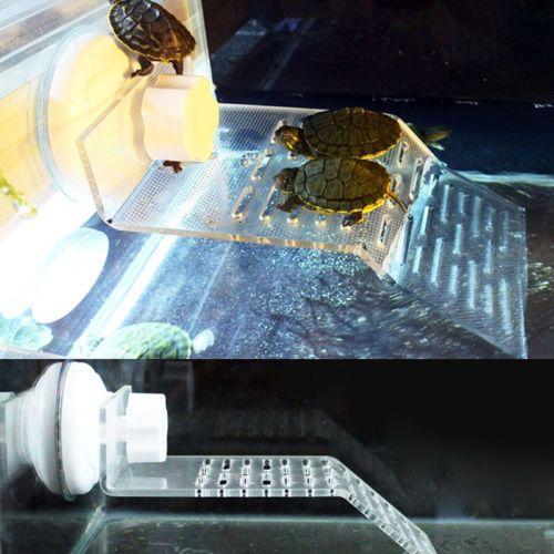 Aquarium Tank For Turtle