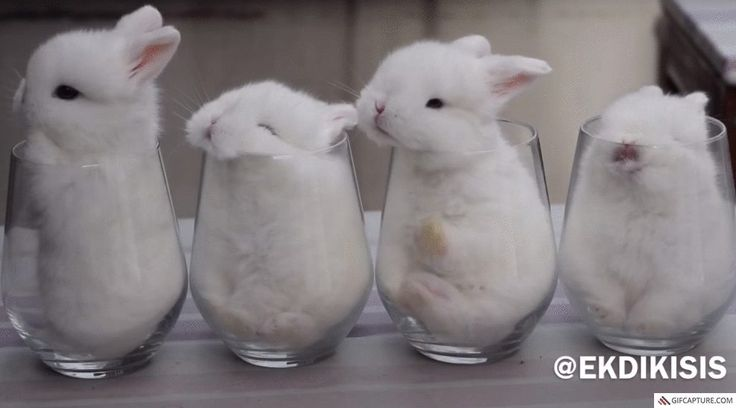 Baby bunnies in cups (GIF)
