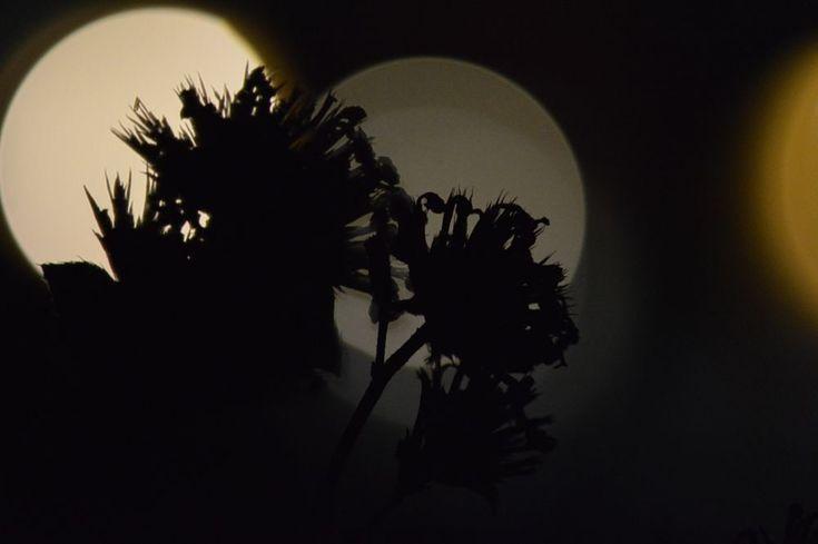 ombre di fiori by lorena.rinaudo.9