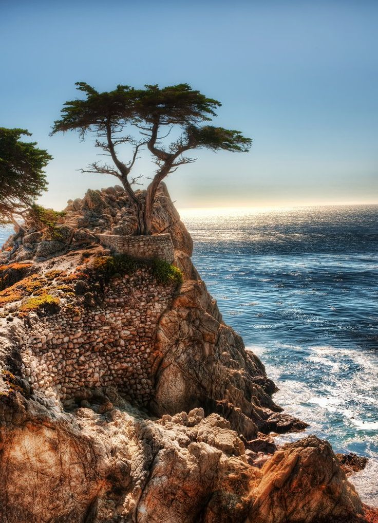 California - Monterrey - Carmel by the Sea - Famous tree:  The Lone Cypress Tree is over 200 years old and because its one of the most famous trees in the world, is also the official symbol of Pebble Beach and you will see it during your drive through 17-Mile Drive. The tree is perched on a rock with supporting cable around it to keep it from falling.