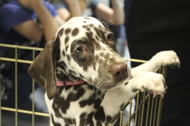 Basically, the Puppy Bowl X is the cutest thing to happen during the sports season. | 61 Adorable Behind The Scenes Moments At Puppy Bowl X