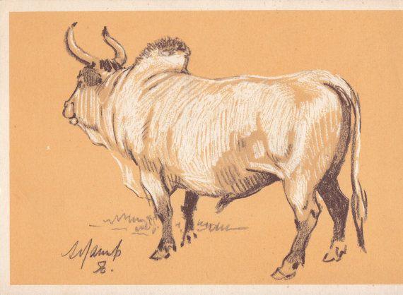A. Laptev Zebu Postcard  1956 by RussianSoulVintage on Etsy