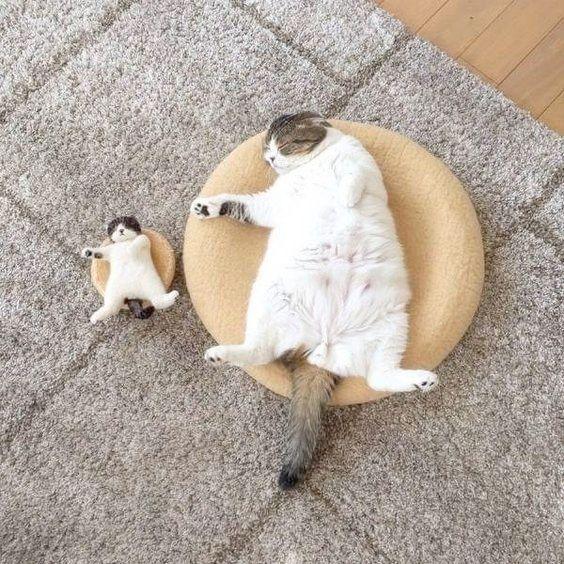 Cats And Kittens For Sale Gumtree Cats And Kittens Brisbane Katten En Kittens Grappige Dieren Katje Katten