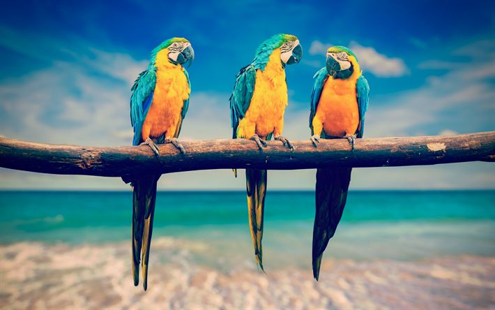 Download wallpapers Blue-yellow macaw, tropical birds, branch, parrots, beautiful birds