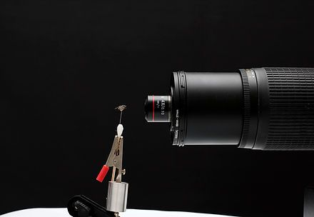 Isn't it cool to use a microscope objective for macro photography? I mean, just by looking at it, it is cool. But when I first started using microscope objecti