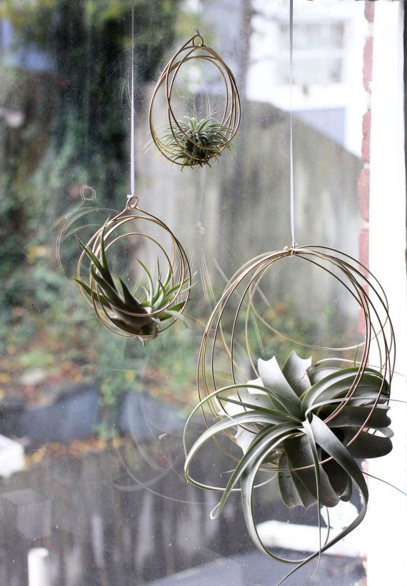 These delightful hanging ornaments are composed of concentric brass coils to support your favorite air plant!