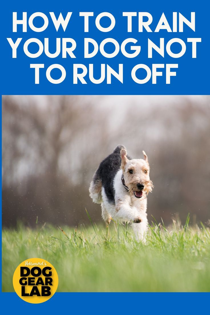 How To Train Your Dog Not To Run Off In 2020 Training Your Dog Dog Training Easiest Dogs To Train