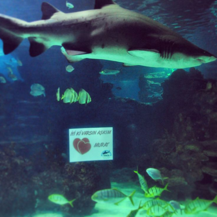 Valentines @Turkuazoo Akvaryum aquarium