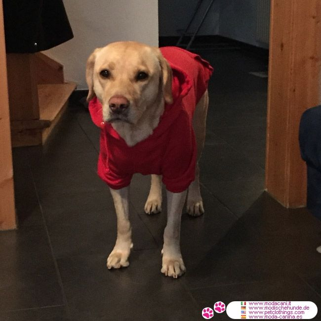Sweat-Shirt Uni Rouge pour Grands Chiens #VetementChiens #Labrador - Sweat-Shirt Rouge pour chiens, conçu spécifiquement pour les Grands Chiens (par ex. Labrador): a un capuche réglable avec coulisse et poche kangourou