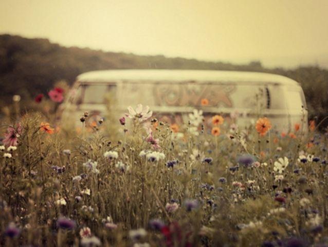 Sommerliche Blumenwiese #goldentoast