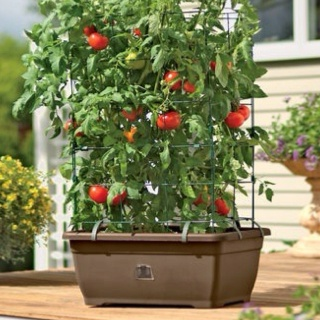 gardeners supply tomato success kit is our exclusive all in one tomato planter and growing kit