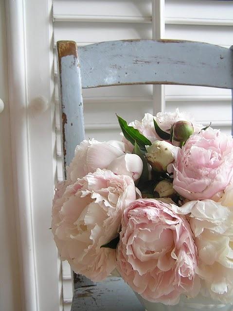 inspiración rosa...