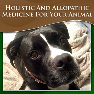 Specialties: Birds, Cats, Dentistry, Dermatology, Dogs, Exotics, Horses, Internal Medicine, Rabbits, Small Animals, Rabbits, Hamsters, Gerbils, Rats, Mice.