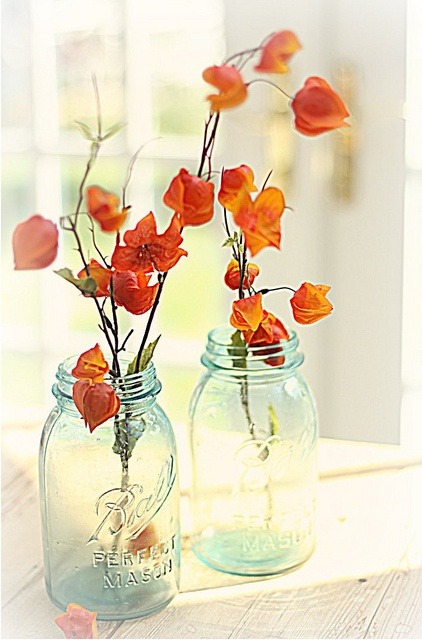 Images about chinese japanese lantern flower on