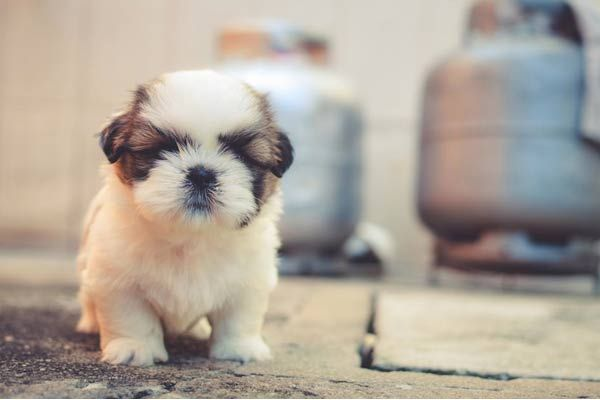 10 Best Surprise Gifts For Husband Birthday That Will Make Him Speechless -  Adopt a Puppy  : Click to read more